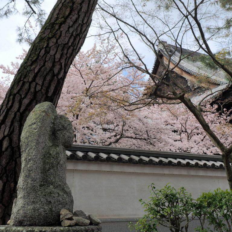 百萬遍知恩寺の春の風景1