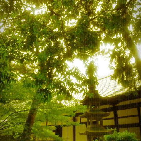 百萬遍知恩寺の夏の風景1